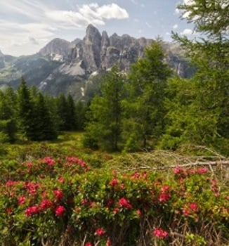 Alta Badia and Surroundings